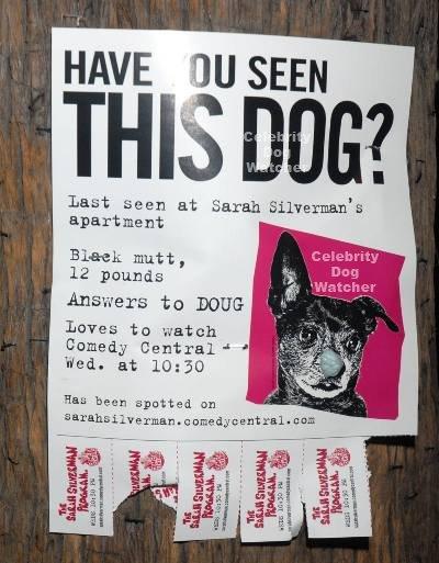 write descriptive essay your dog