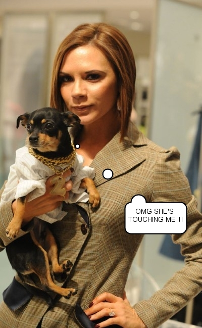 Holding a Dog Makes Victoria Beckham Smile