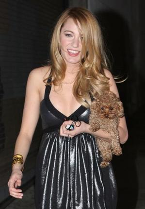 Blake Lively obeys the Maltipoo