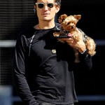 orlando bloom yorkie