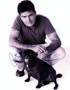 charlie sheen pug