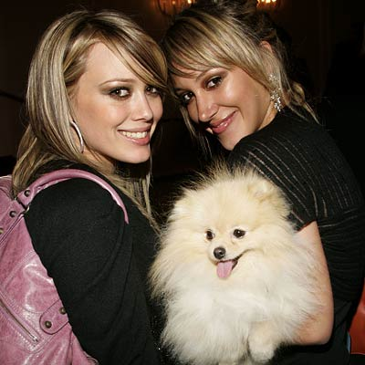 haylie duff dog bentley